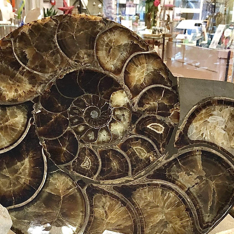 Home Decor- Fossils, Crystals, Art Glass, Pottery Utopianorthwest  Ammonite / Glass Heart