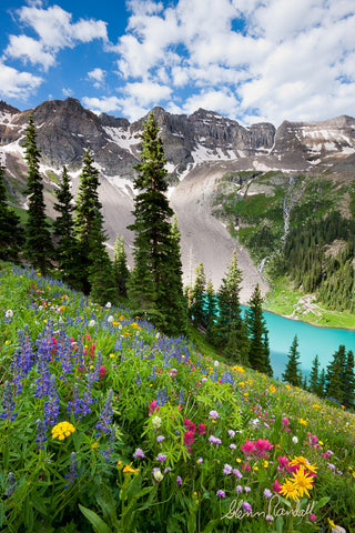 Wildflowers Above Blue Lake Metal Print