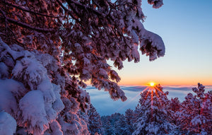 Frosted Ponderosa Pine At Sunrise Card