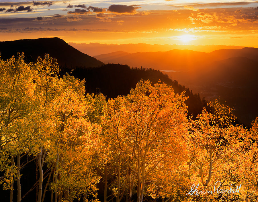 Sunrise Aspen Metal Print