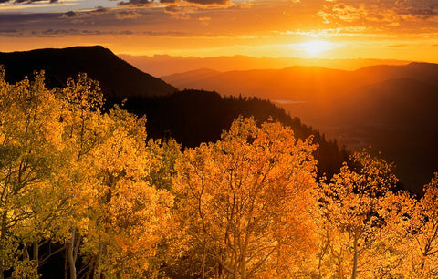 Sunrise Aspen Card