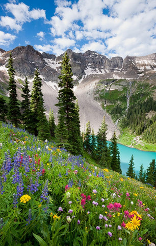 Wildflowers Above Blue Lake Card