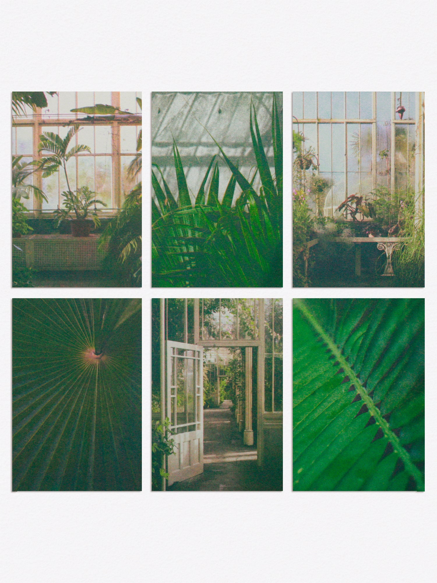 Postcards featuring photographies taken in botanic gardens in Dublin.