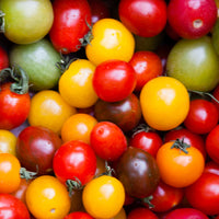 Tomatoes, Multi-colour Baby x 250g