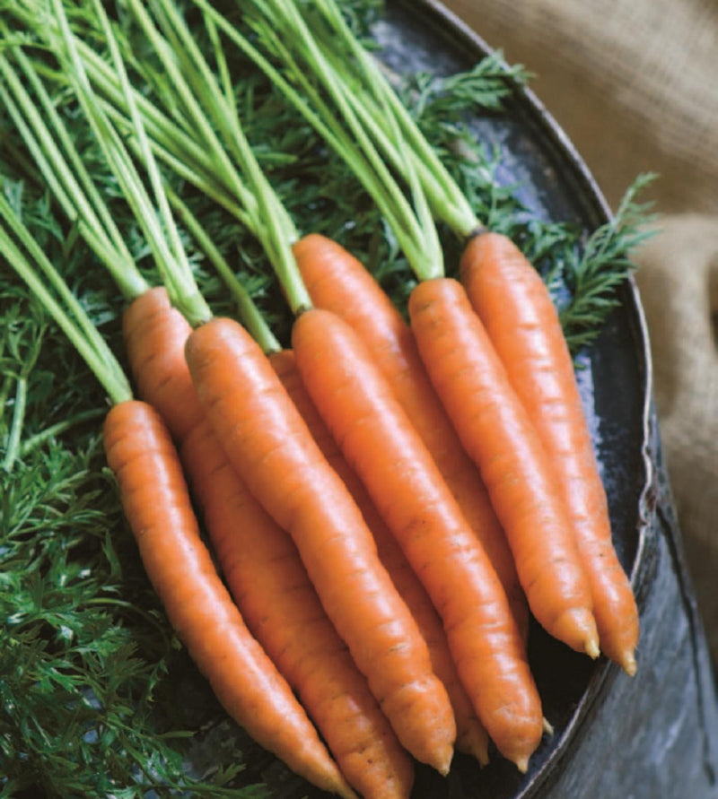 Dutch Carrots (Bunch)