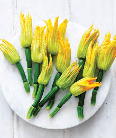 Zucchini Flowers (Female, Tray Qty 6)