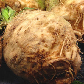 Celeriac whole - each