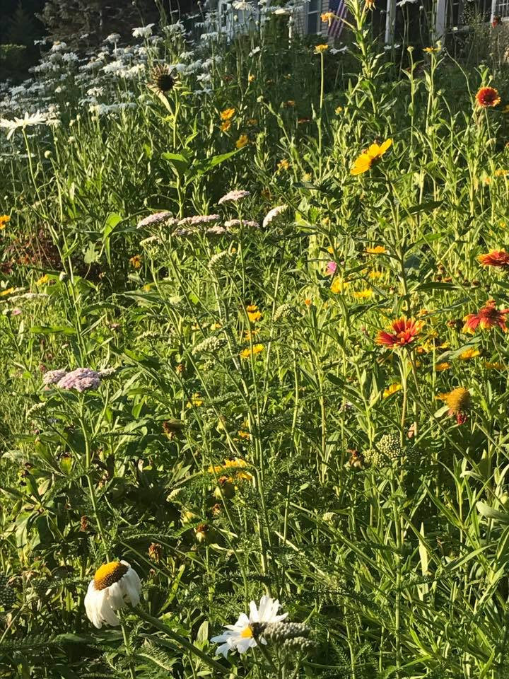 Napa Valley Vineyard Wildflower Seed Mix