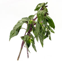 Load image into Gallery viewer, Thai Basil 九层塔 (4 OZ)