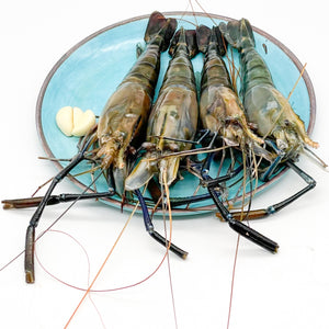 Head-On Shell-On Shrimp 2/4整只大虾(2 LBS)