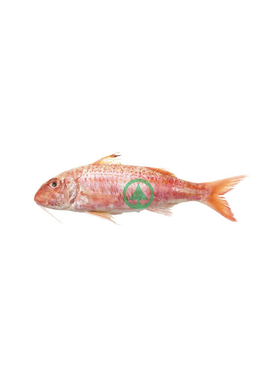 Red Snapper / Lithrini ~500g -1Pc  (€7.49/Kg)