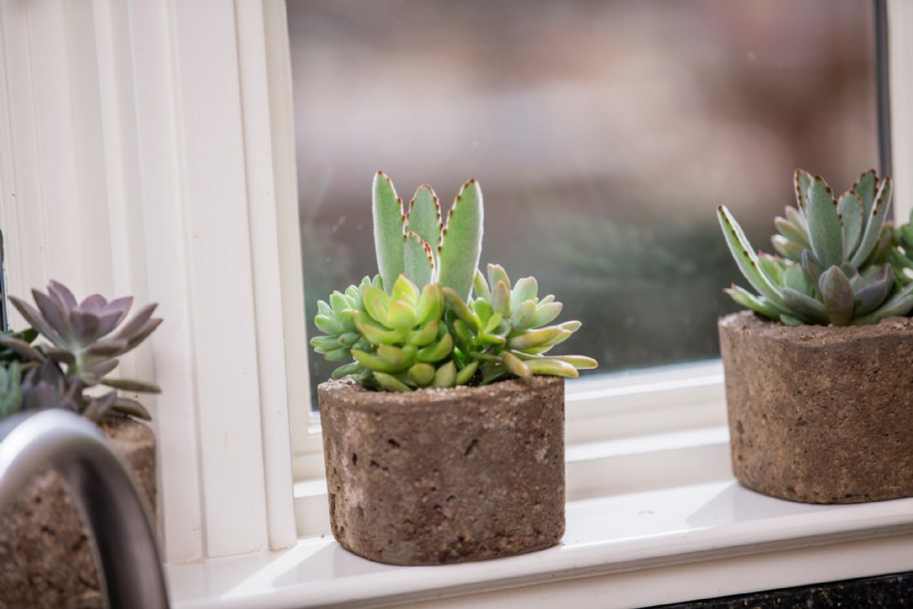 Assorted Succulent Square Pot Small - WishBasket