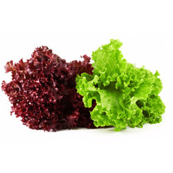 Green and Red Leaf Lettuce 1 head
