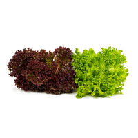 Food Pantry Donation: Green & Red Leaf Lettuce