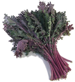 Organic Red Russian Kale 1 bunch