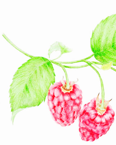 Red Raspberry Seed Oil - EmpireSquid Organics