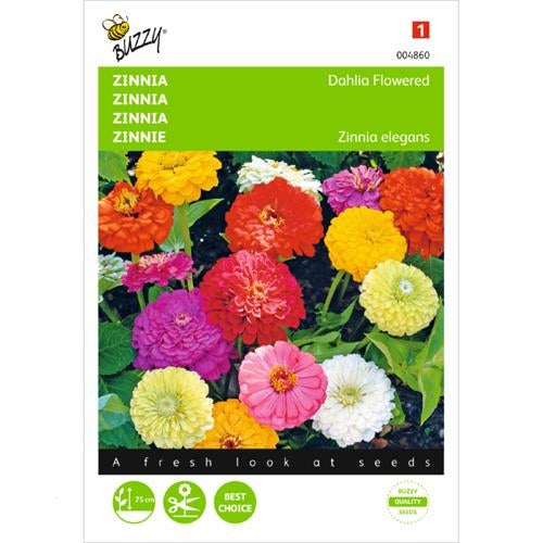 Zinnia Dahlia flowered, double mixed Seeds