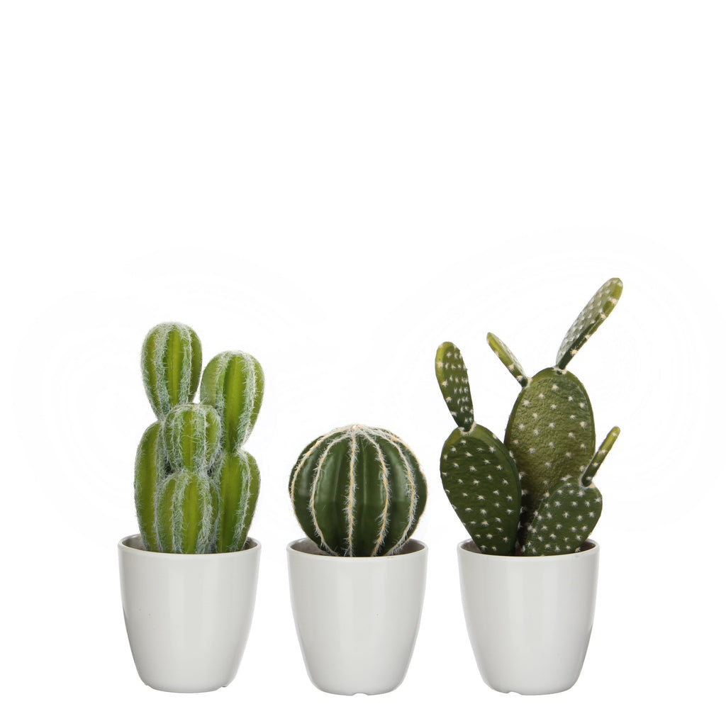 Artificial Cactus in White Pots - 3 varieties per set H28xD9.5cm