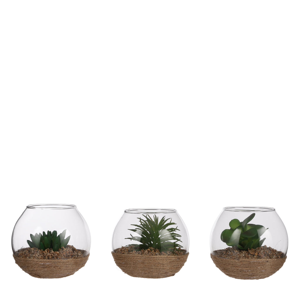 Set of 3 Artificial Succulents in glass pot