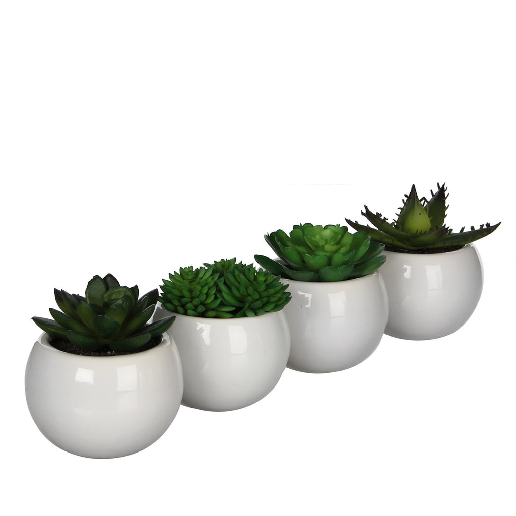 Artificial Succulents in White Pots - 4 varieties per set H7xD7.5cm