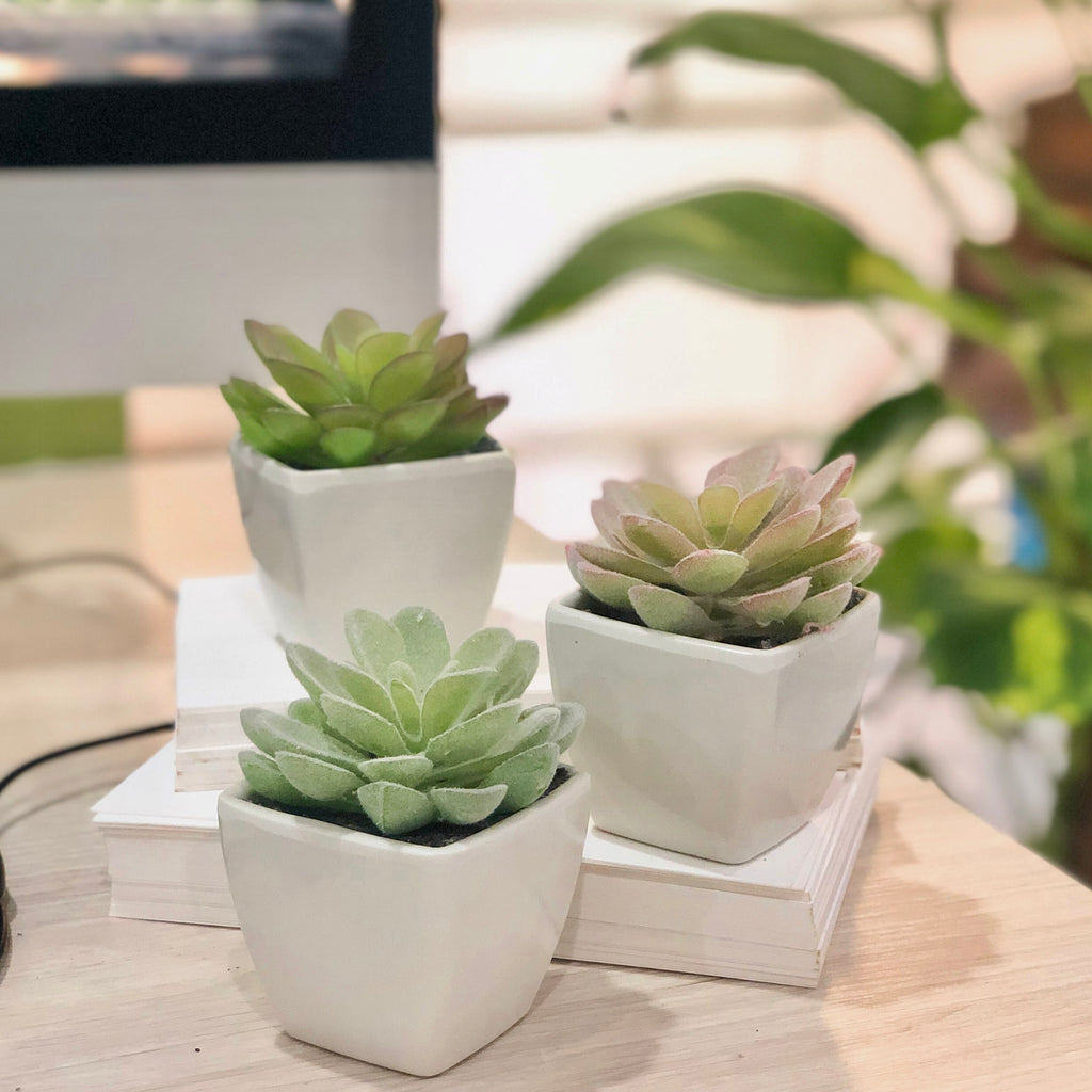 Set of 3 Artificial Mini Succulents in White Pots