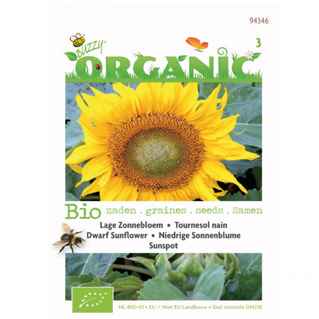 Organic Seeds Dwarf Sunflower Buzzy