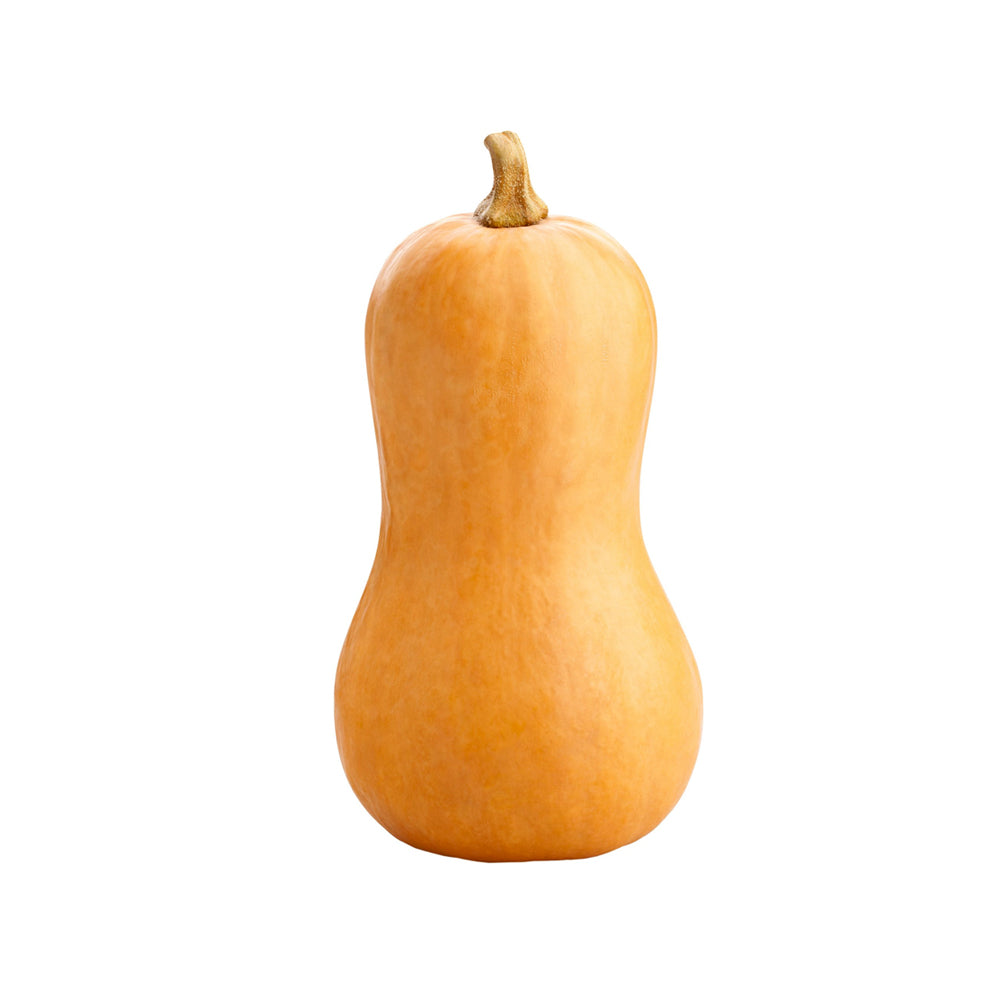 Squash - Butternut / each