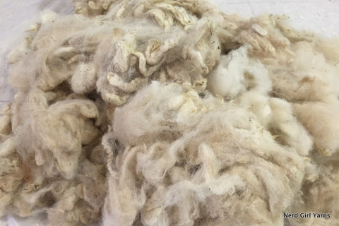Destash! Cria Alpaca Unwashed Fleece - 10.4oz