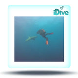 Shark Dive with iDive!