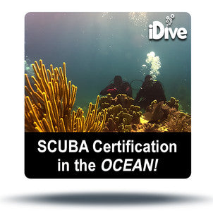 Ocean dives on coral reefs