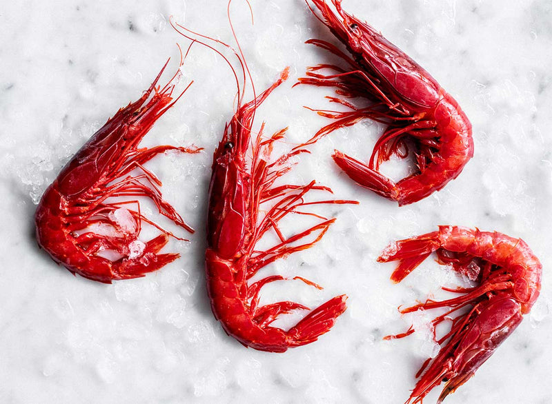 Medium Carabineros (Frozen)