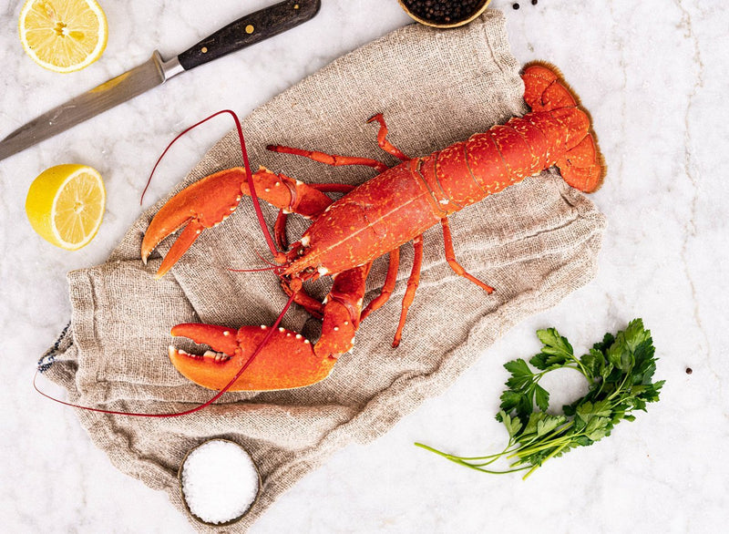 Cooked Lobster, Large (WHOLE 600-800g live weight)