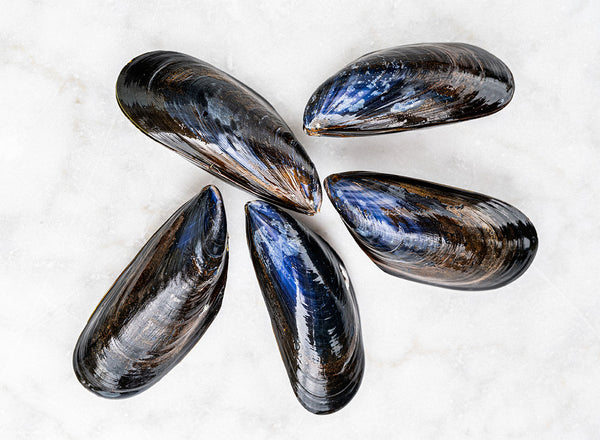 Fresh Cornish Rope Grown Mussels