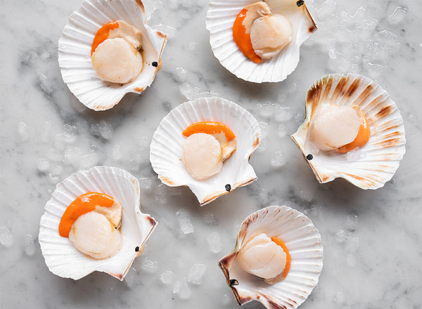 Fresh Scallops in Shells (Half Dozen)
