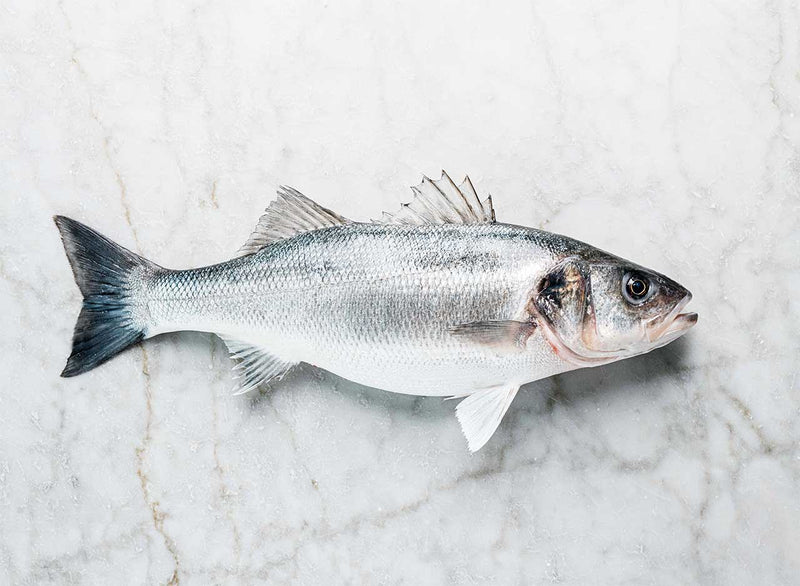 Wild Sea Bass Whole