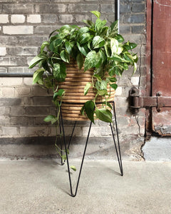 Hairpin Plant Stand