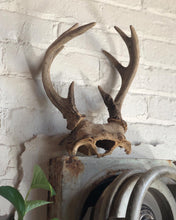 Load image into Gallery viewer, Medium-Sized Antlers