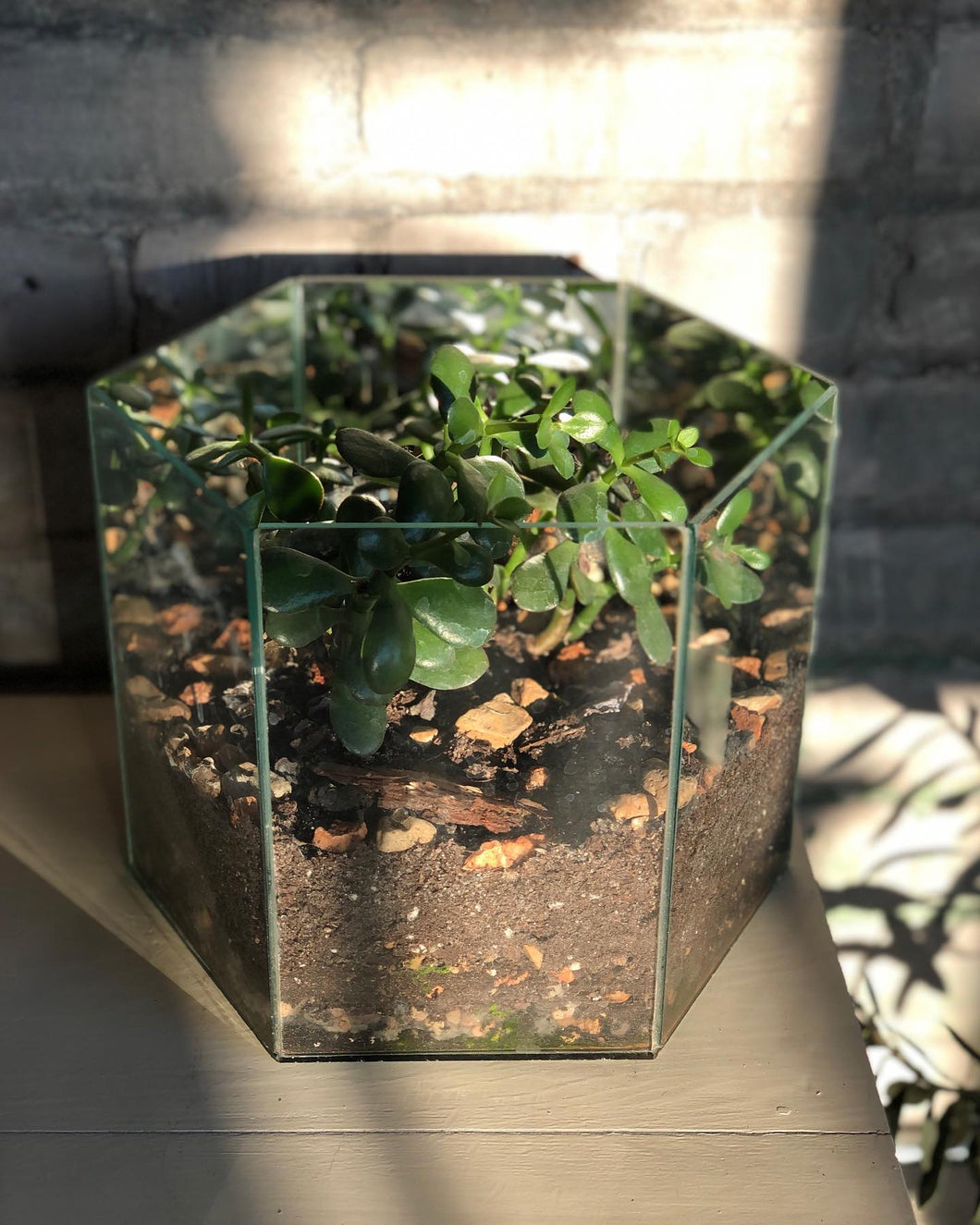 Hexagonal Terrarium Planter