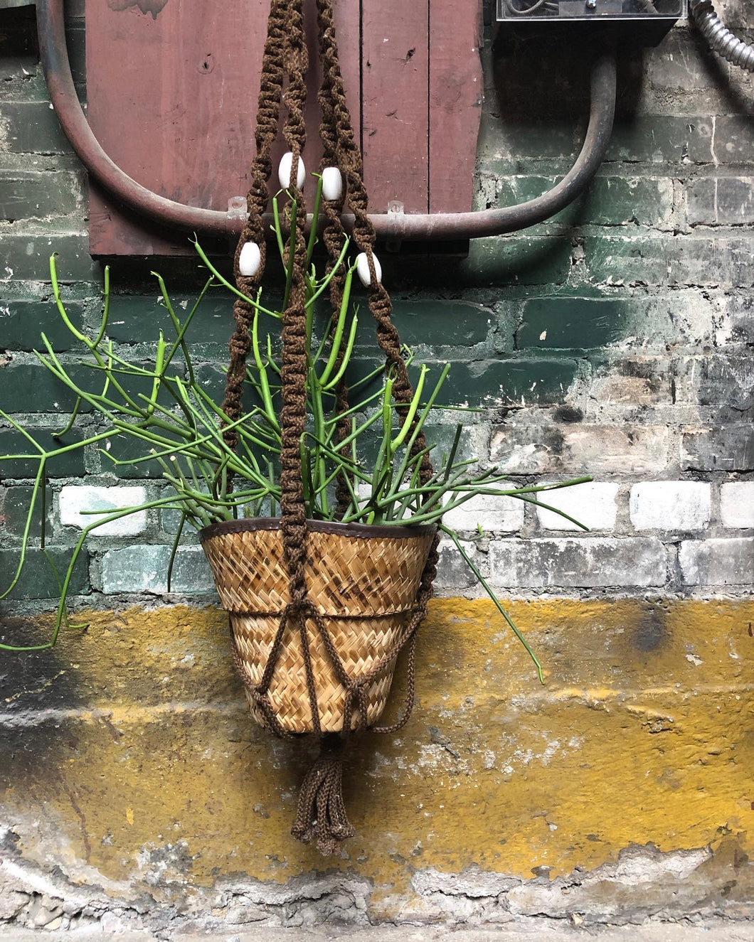 Hanging Macrame Hanging Planter w/ Basket and Pencil Cactus