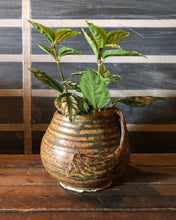 Load image into Gallery viewer, Ceramic Pot w/ Plant