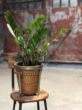Load image into Gallery viewer, ZZ Plant w/ Basket Bucket