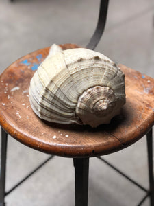 Large Shell