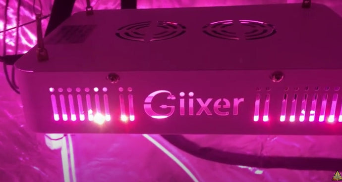 Giixer 1000W LED grow light review