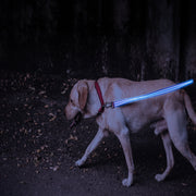 Blue LED Rechargeable Dog Leash