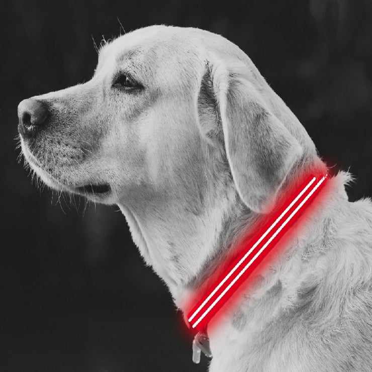 Medium Red LED Rechargeable Dog Collar