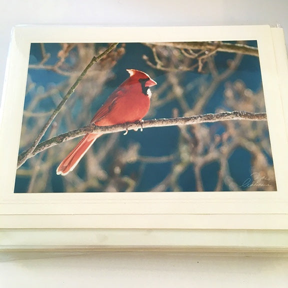 Art Card Red Cardinal