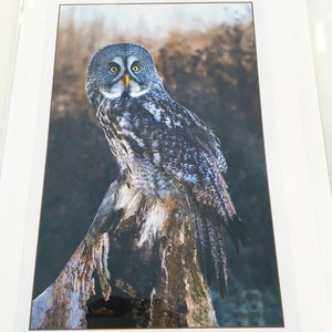 Art Card Great Grey Owl