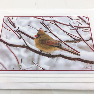 Art card Female Cardinal