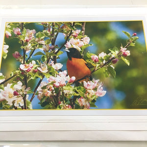 Art Card Baltimore Oriole