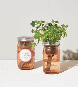 Hydroponic Garden Jar - Parsley